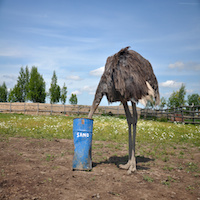 What We Can Learn From an Ostrich